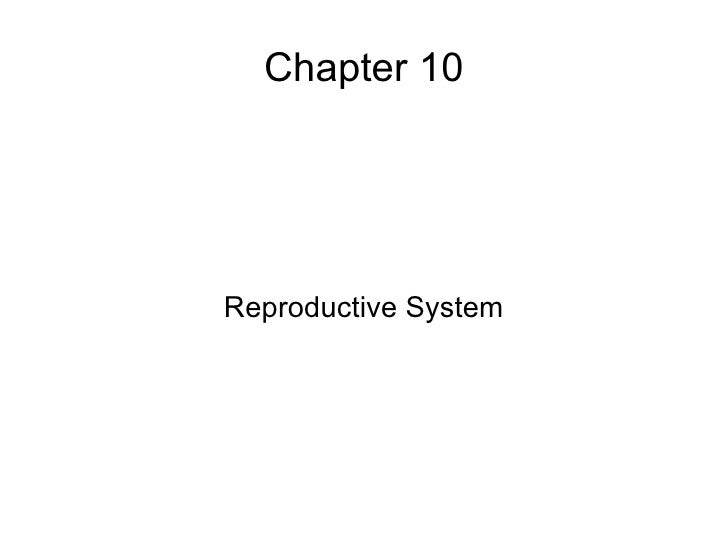 Chapter 10 Reproductive System