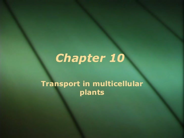 Chapter 10Transport in multicellular         plants