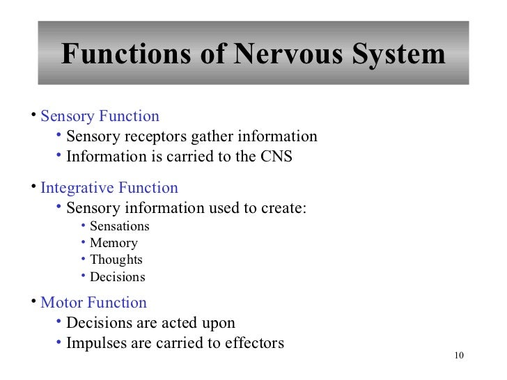 chapter 10 nervous system i - basic structure and function, Cephalic Vein