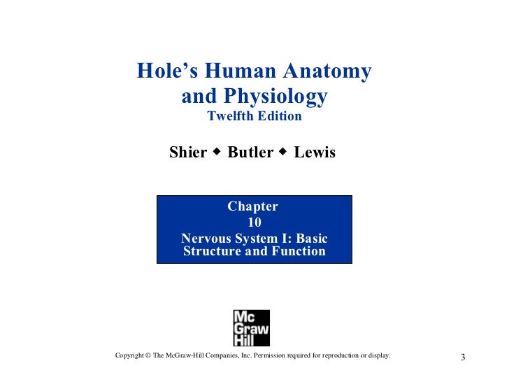 Chapter 10 Nervous System I - Basic Structure and Function
