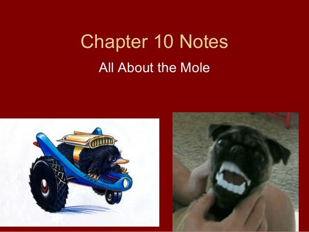 Chapter 10 Notes All About the Mole
