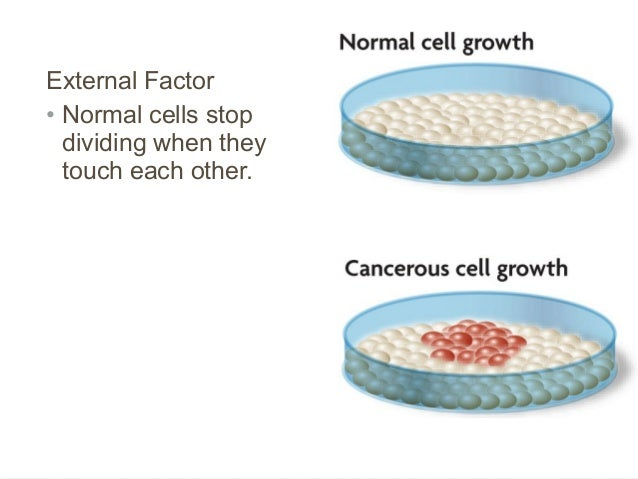 cell growth and division notes