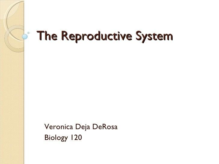 The Reproductive System Veronica Deja DeRosa Biology 120