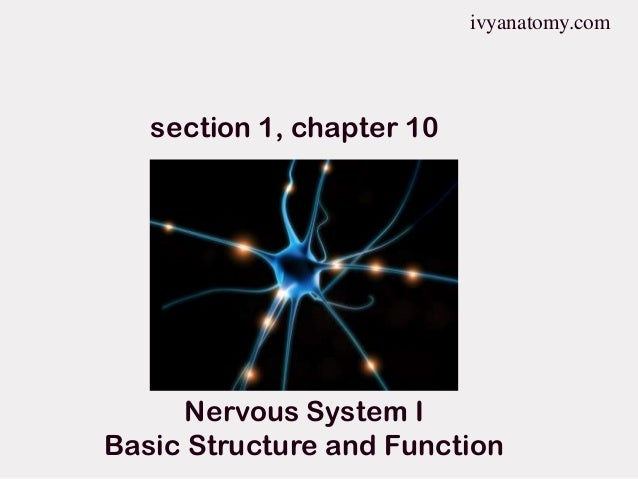 ivyanatomy.com  section 1, chapter 10  Nervous System I Basic Structure and Function