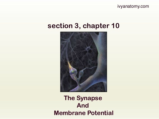 ivyanatomy.com  section 3, chapter 10  The Synapse And Membrane Potential