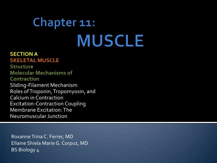 Chapter 11: MUSCLE<br />SECTION A<br />SKELETAL MUSCLE<br />Structure<br />Molecular Mechanisms of<br />Contraction<br />S...