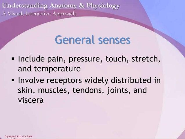 Chapter11 - Sense Organs