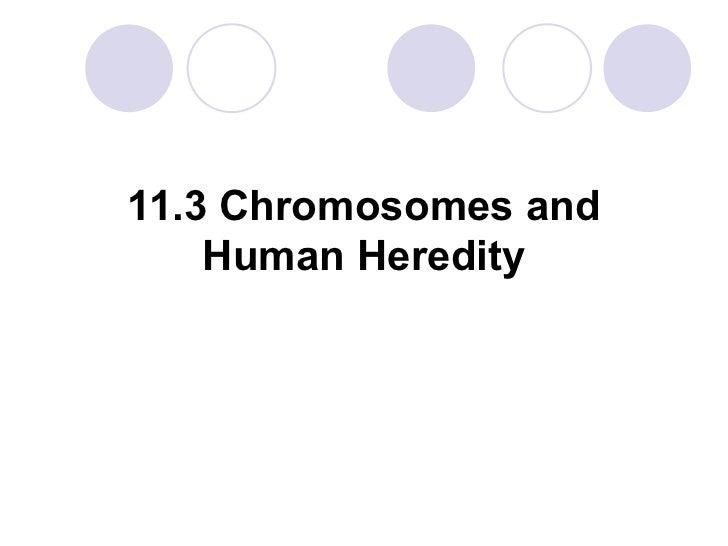 11.3 Chromosomes and Human Heredity