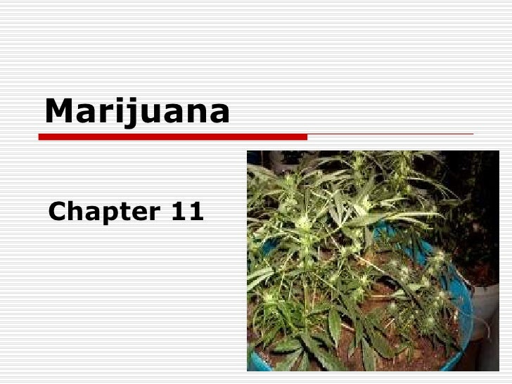 Marijuana Chapter 11