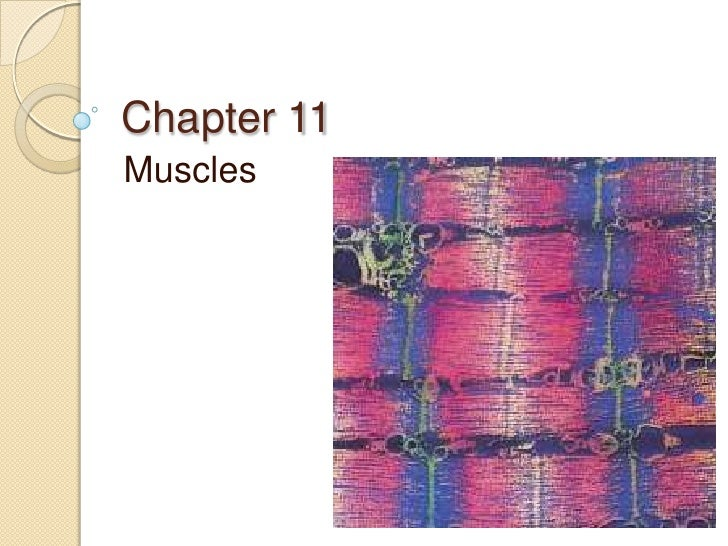 Chapter 11<br />Muscles<br />