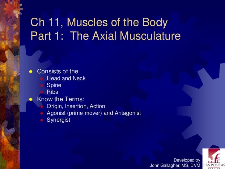 Ch 11, Muscles of the BodyPart 1: The Axial Musculature   Consists of the        Head and Neck        Spine        Rib...