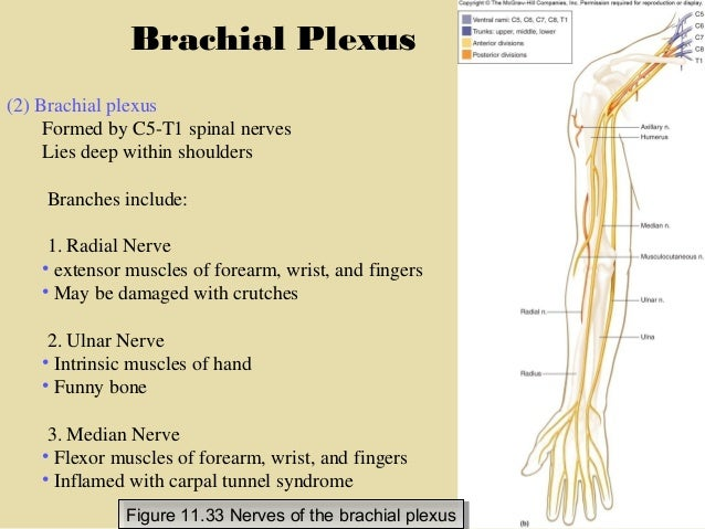 section 5, chapter 11 cranial nerves and spinal nerves