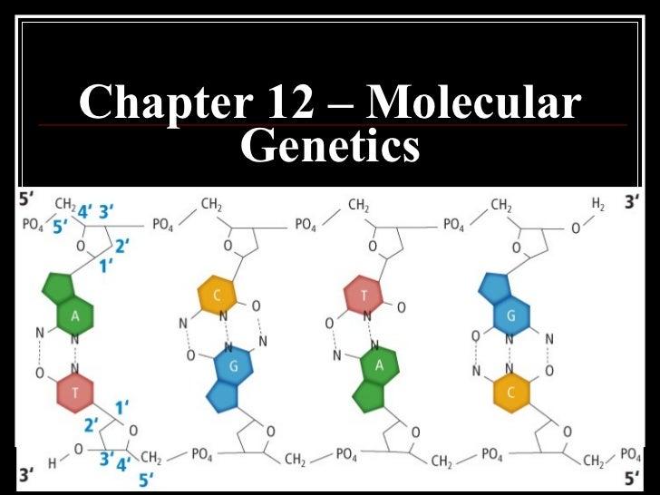 Chapter 12 – Molecular Genetics