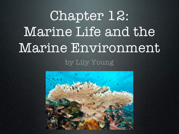 Chapter 12: Marine Life and the Marine Environment       by Lily Young