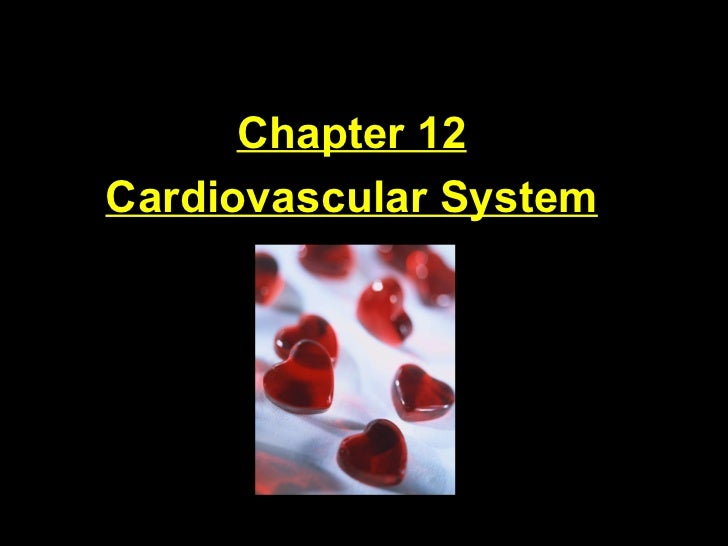 Chapter 12 Cardiovascular System