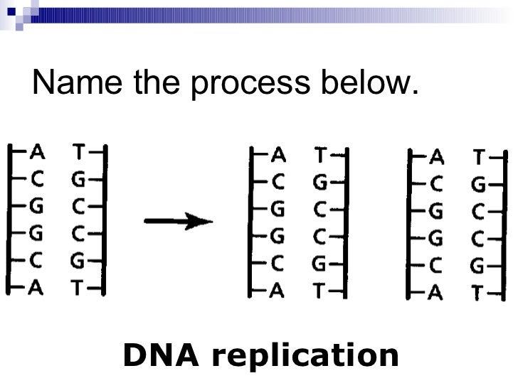Chapter 124 gene regulation mutation – Chapter 11 Dna and Genes Worksheet Answers