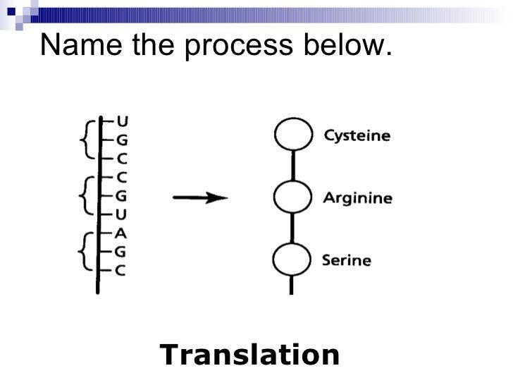 Chapter 12.4 gene regulation & mutation