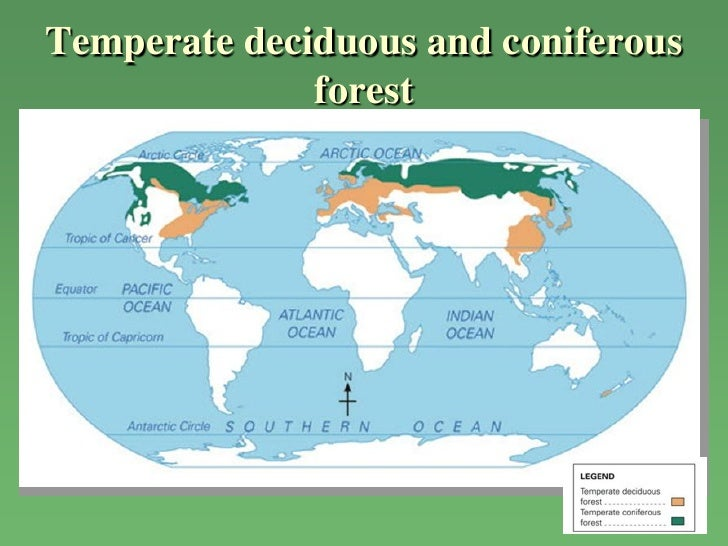 Chapter 12 natural vegetation tropical rainforest 13 temperate deciduous and coniferous forest gumiabroncs Gallery