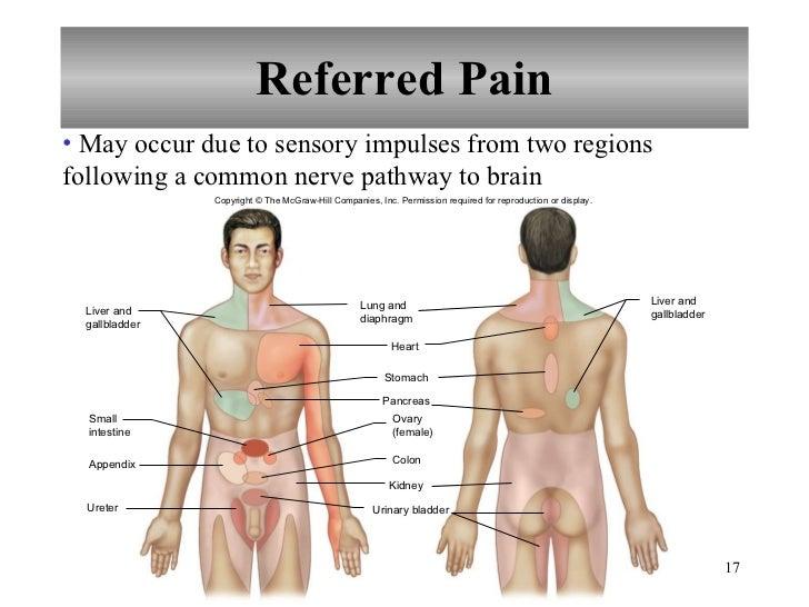 Chapter 12 Nervous System Iii Senses 8702832