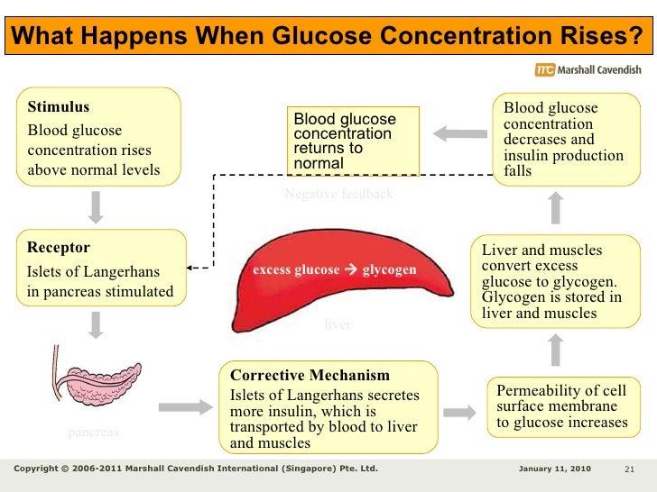 glucose homeostasis Glucose homeostasis and insulin resistance by leszek szablewski doi: 102174/97816080518921110101 eisbn: 978-1-60805-189-2, 2011.