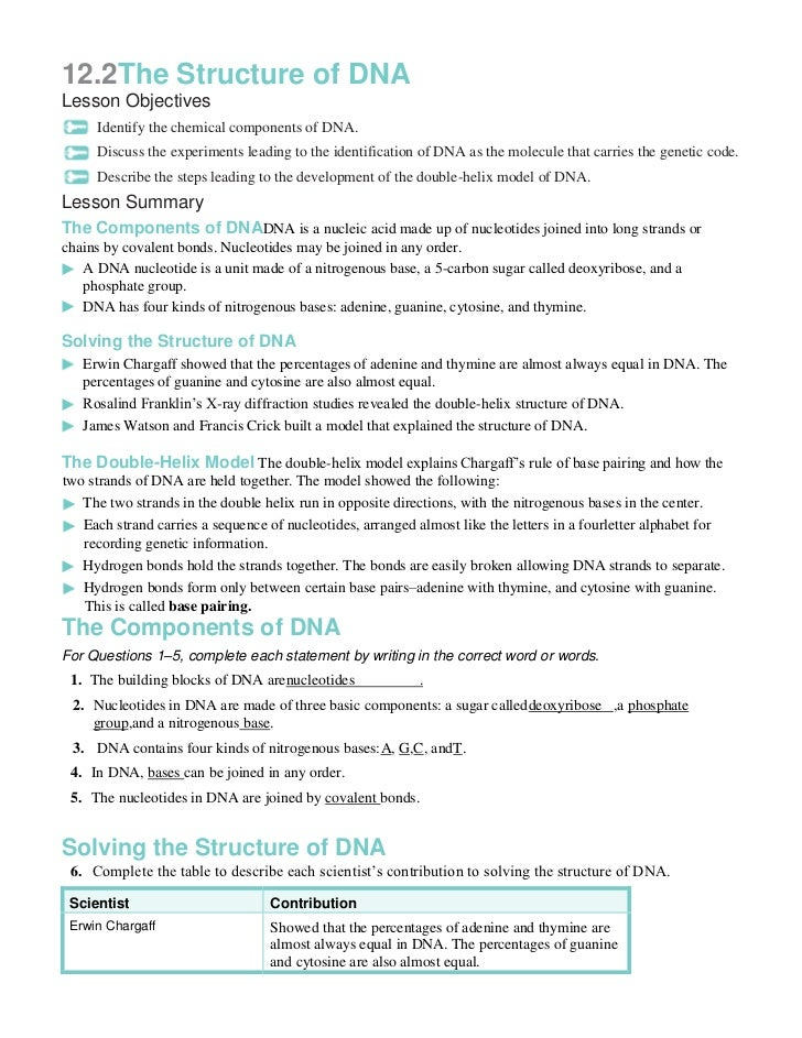 Chapter12 packet – Dna the Molecule of Heredity Worksheet