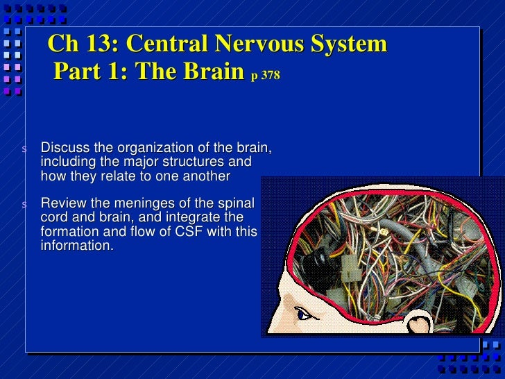 Ch 13: Central Nervous System  Part 1: The Brain  p 378 <ul><li>Discuss the organization of the brain, including the major...
