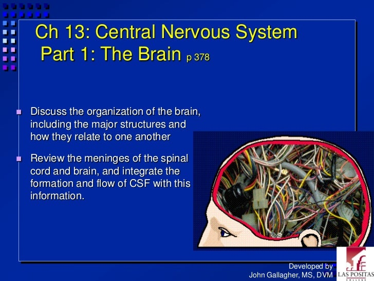Ch 13: Central Nervous System     Part 1: The Brain p 378   Discuss the organization of the brain,    including the major...
