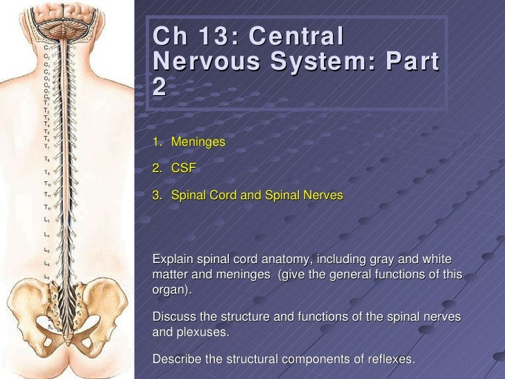 Ch 13: Central Nervous System: Part 2 Explain spinal cord anatomy, including gray and white matter and meninges  (give the...