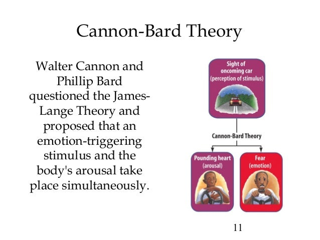 advantages of cannon bard theory Two factors contributed to philip bard's remarkable,  dealt respectfully with the james-lange theory and joined others (sherrington, cannon, lewis, and britton.
