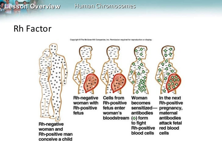 rhesus factor dominance in a relationship