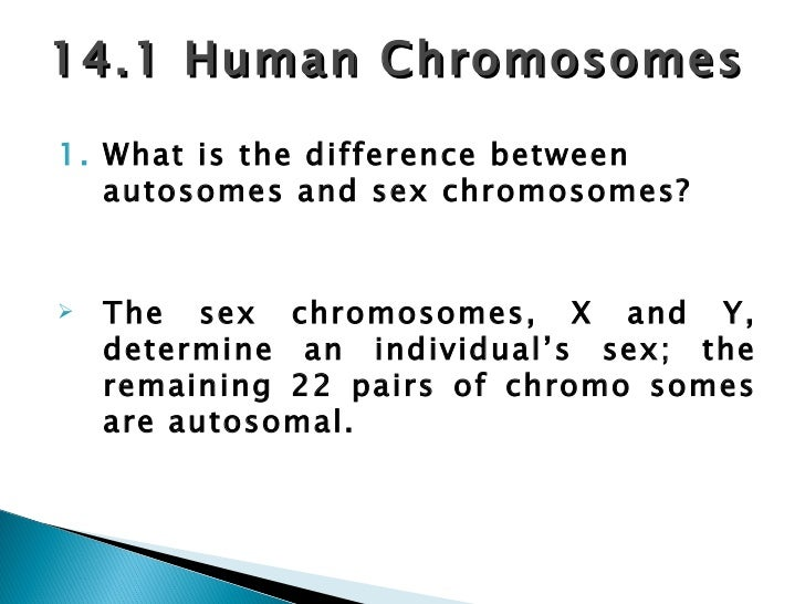 distinguish between autosomes and sex chromosomes in humans in Stafford