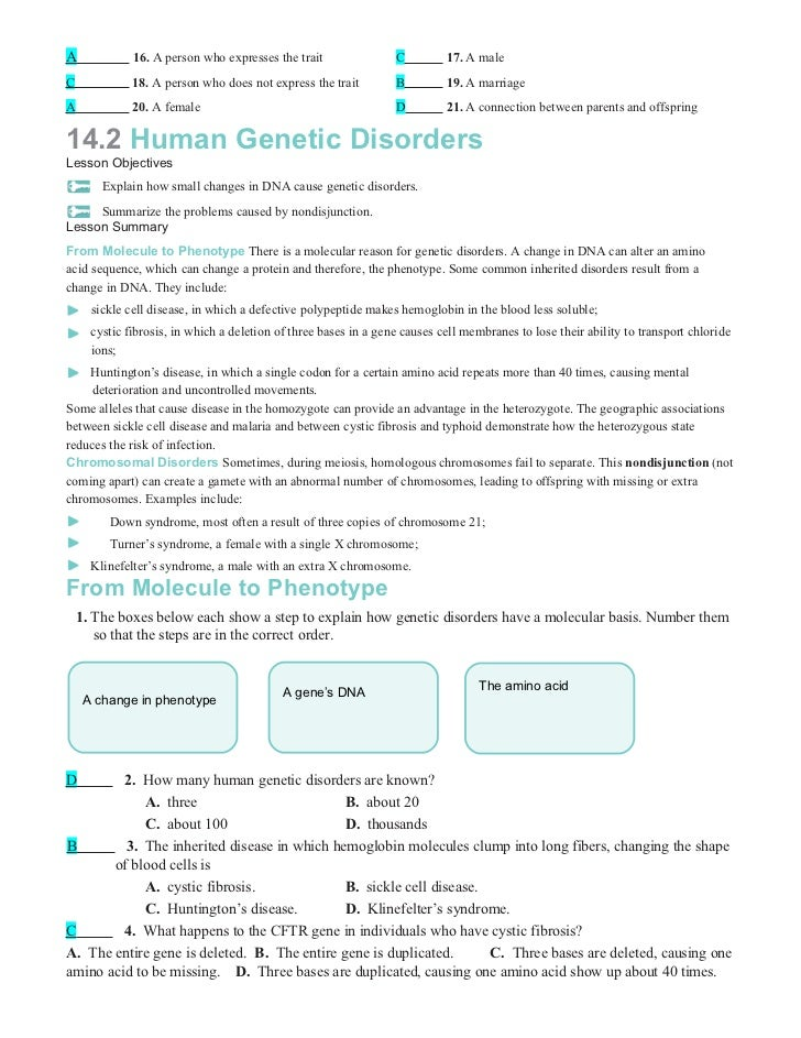 Chapter14worksheets – Genetic Disorders Worksheet