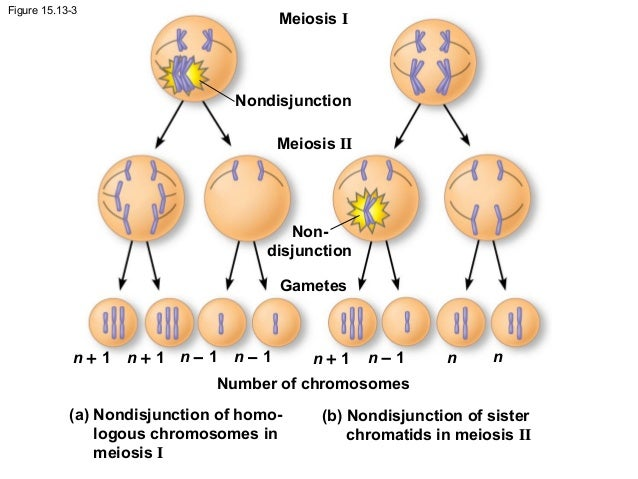 ap bio chapter 15 the chromosomal Color blindness is an x-linked recessive trait a color-blind man has a daughter with normal color vision she mates with a color-blind male what is the expected phenotypic ratio of their offspring (activity 15b) all the offspring have normal color vision 2 normal vision females : 1 normal vision male : 1 color-blind male.