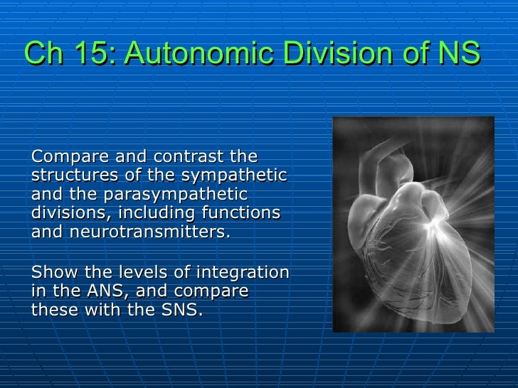 Ch 15: Autonomic Division of NS   Compare and contrast the structures of the sympathetic and the parasympathetic divisions...