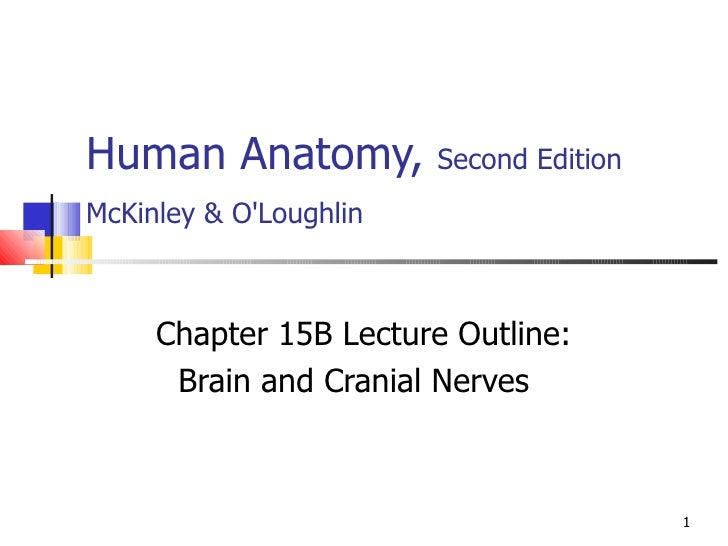 Human Anatomy,  Second Edition McKinley & O'Loughlin   Chapter 15B Lecture Outline: Brain and Cranial Nerves
