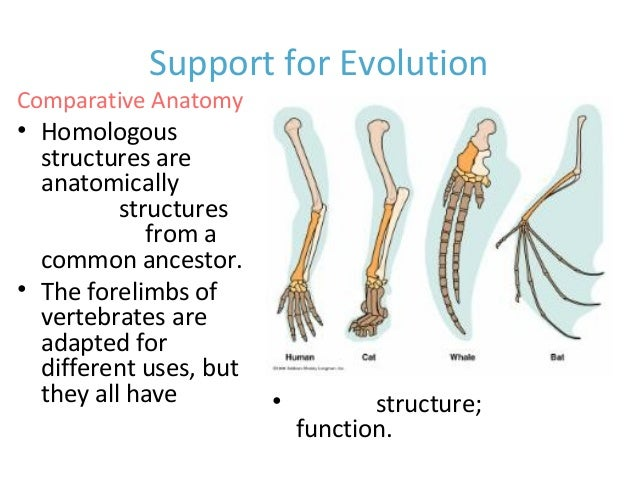 theory of evolution theory of evolution homologous structures