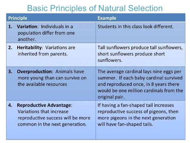 The Four Main Principles Of Natural Selection