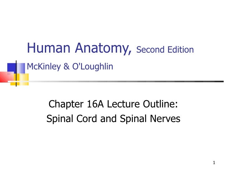 Human Anatomy,  Second Edition McKinley & O'Loughlin   Chapter 16A Lecture Outline: Spinal Cord and Spinal Nerves