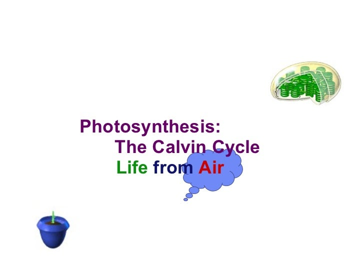 Photosynthesis:   The Calvin Cycle   Life   from   Air