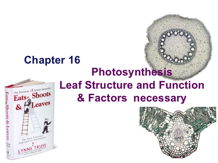 Chapter 16 2005-2006 Photosynthesis Leaf Structure and Function & Factors  necessary