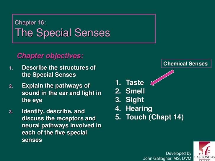 Chapter 16:     The Special Senses     Chapter objectives:                                                         Chemica...