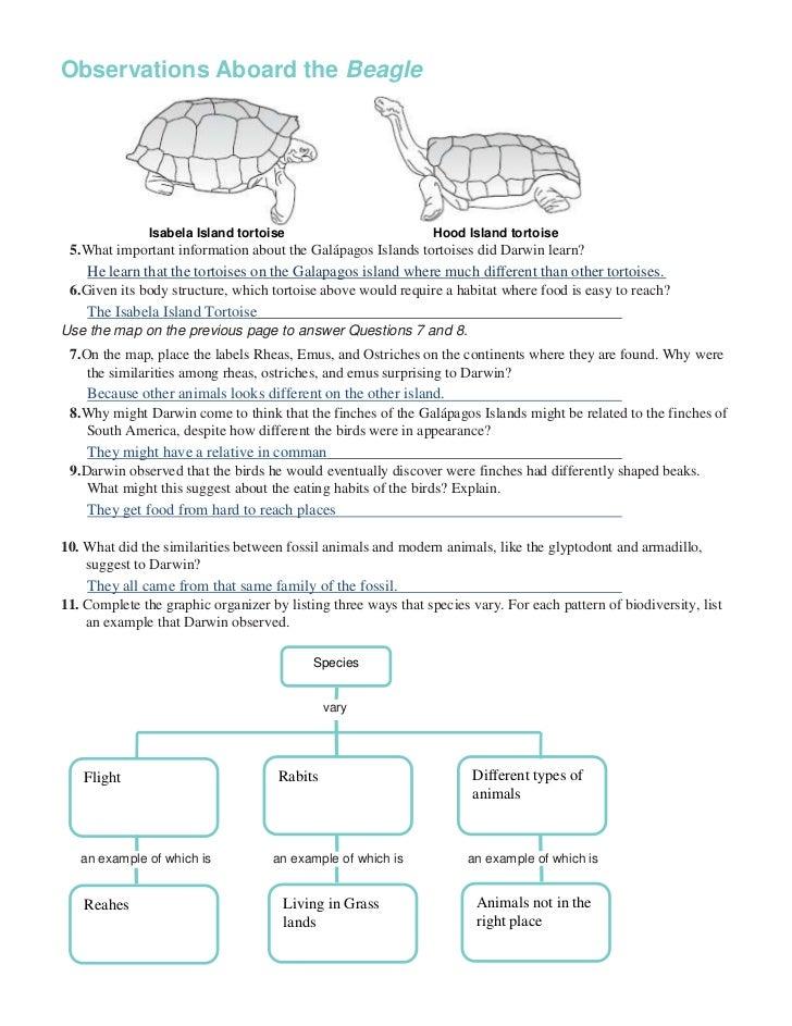 Darwin Interview Worksheet