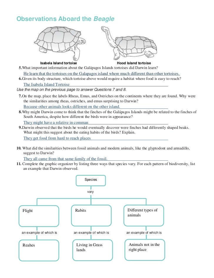 Chapter 16 worksheets – Patterns of Evolution Worksheet