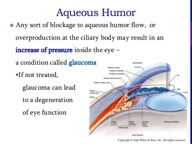 Vitreous Humor Anatomy Diagram amp Function  Body Maps