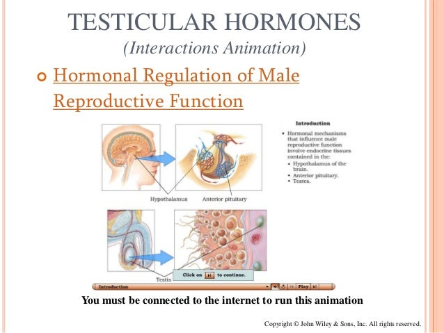 hormone that maintains secondary sex characteristics male in Wilmington