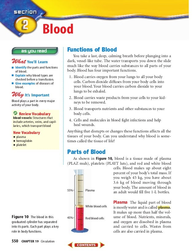 550 CHAPTER 19 Circulation Functions of Blood You take a last, deep, calming breath before plunging into a dark, vessel-li...