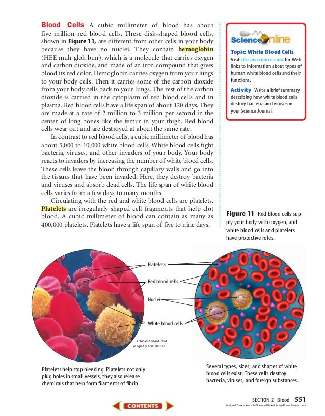 SECTION 2 Blood 551 Blood Cells A cubic millimeter of blood has about five million red blood cells. These disk-shaped bloo...