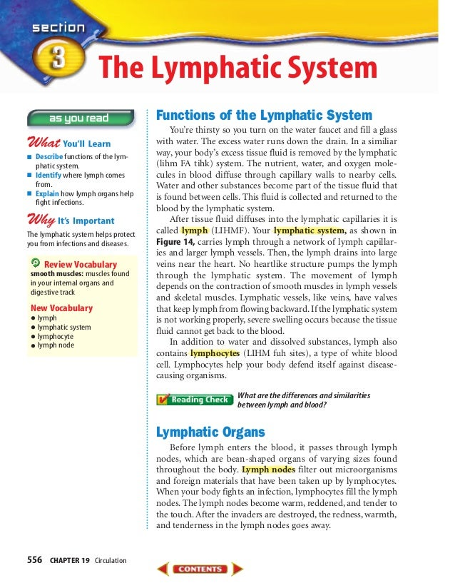 556 CHAPTER 19 Circulation Functions of the Lymphatic System You're thirsty so you turn on the water faucet and fill a gla...