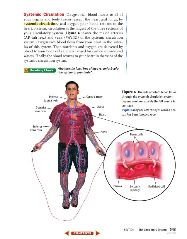 SECTION 1 The Circulatory System 543 Systemic Circulation Oxygen-rich blood moves to all of your organs and body tissues, ...