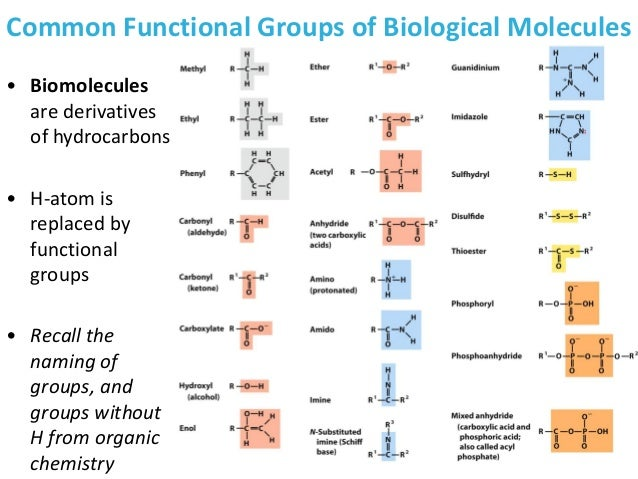 experimenting with biological macromolecules in various Ecology biology-chapter 3 study guide by wolfekristin includes 63 questions covering vocabulary,  and then to various heterotrophs(consumers  biological.